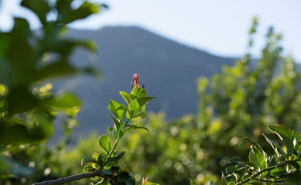 La clave para nuestros cultivos es conocer y proteger la salud de suelo