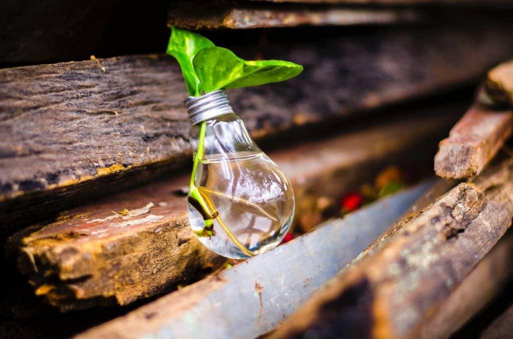 innovation-light-bulb-plant-1024×678
