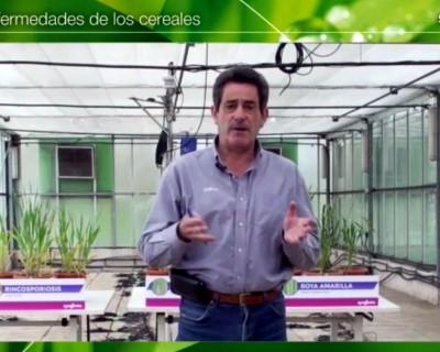 Syngenta analiza las principales enfermedades foliares del trigo y la cebada en una jornada técnica
