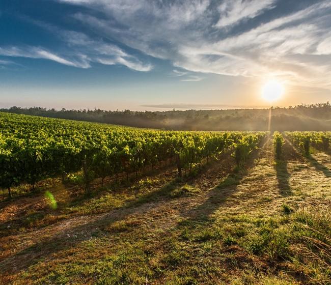MAPA y sector analizan medidas para reequilibrar el mercado vitivinícola a medio y largo plazo