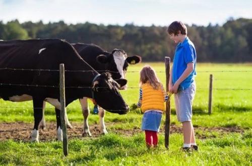Eurobarómetro: una remuneración justa para los agricultores, tercera máxima prioridad que debería tener el Pacto Verde Europeo