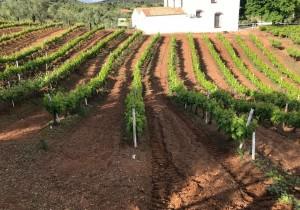 SerBiotec lanza una solución innovadora basada en microorganismos vivos para recuperar suelos