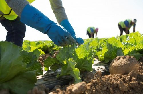 Ligera mejoría del empleo y de la afiliación a la Seguridad Social en el agro durante abril