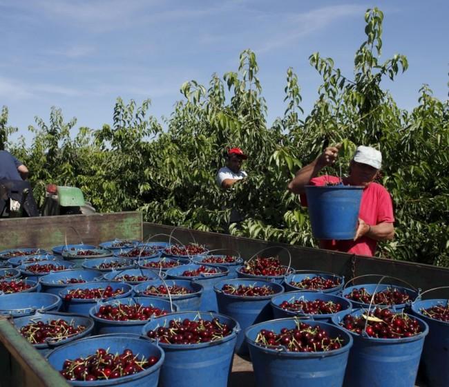 El sector de fruta de hueso adapta su potencial productivo a la demanda de los consumidores