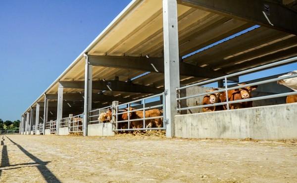 El FEGA fija los importes definitivos de ayuda asociada PAC 2020 a las explotaciones de vacuno de cebo