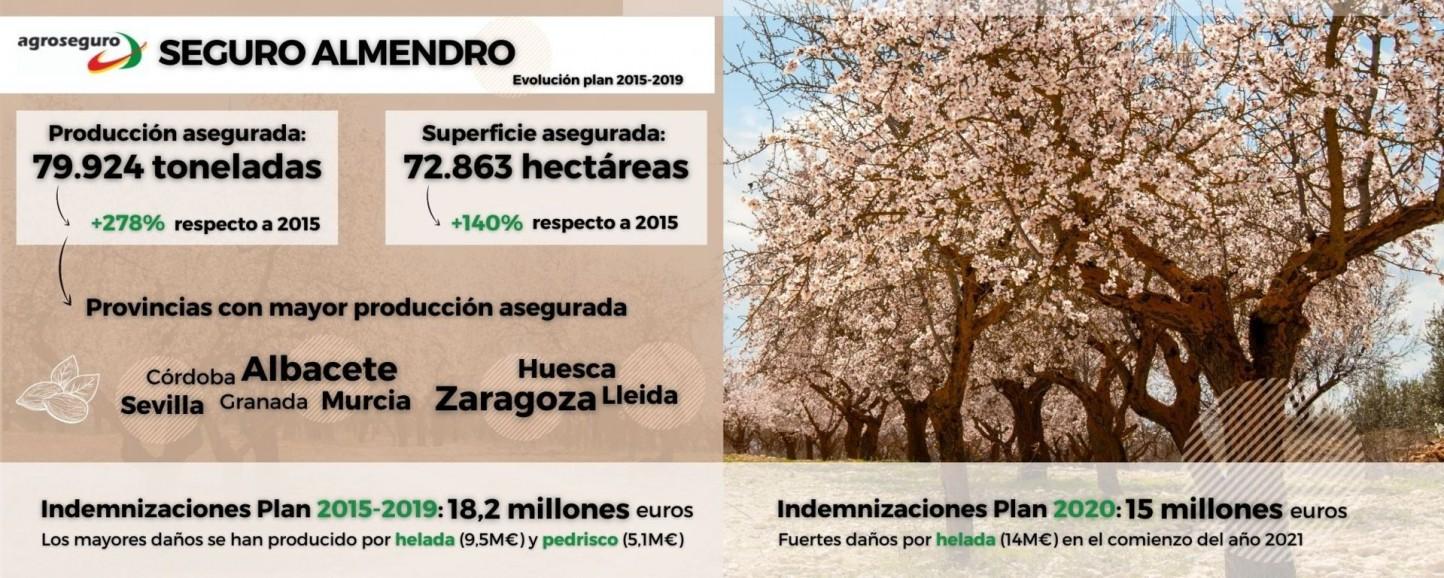 Infografía Almendro _baja