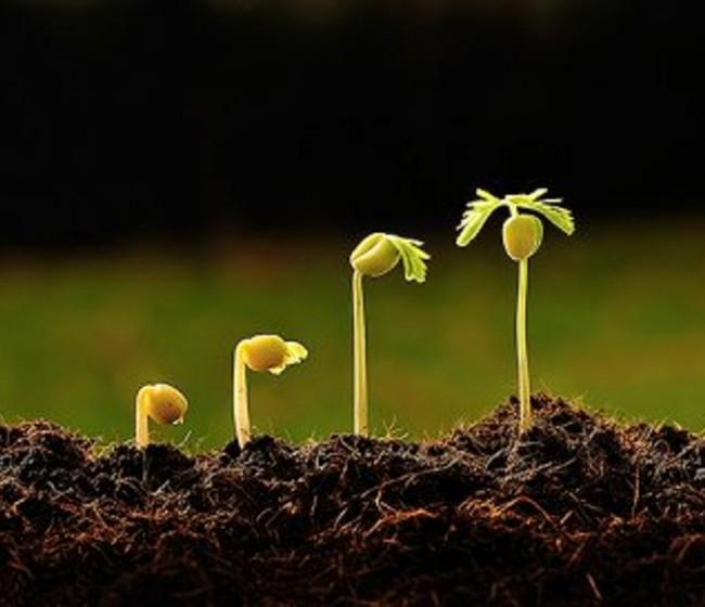 El CESE apoya las iniciativas para reducir los riesgos asociados a los fitosanitarios