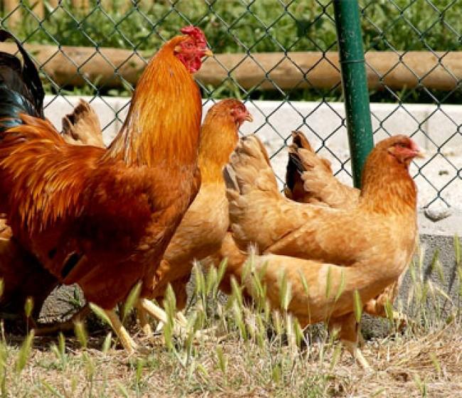 El MAPA impulsa la creación de un centro nacional de referencia de Bienestar Animal