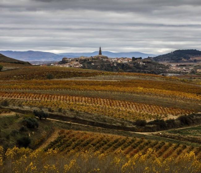 La Rioja: Agricultura publica los costes de producción medios de la uva y el vino a granel