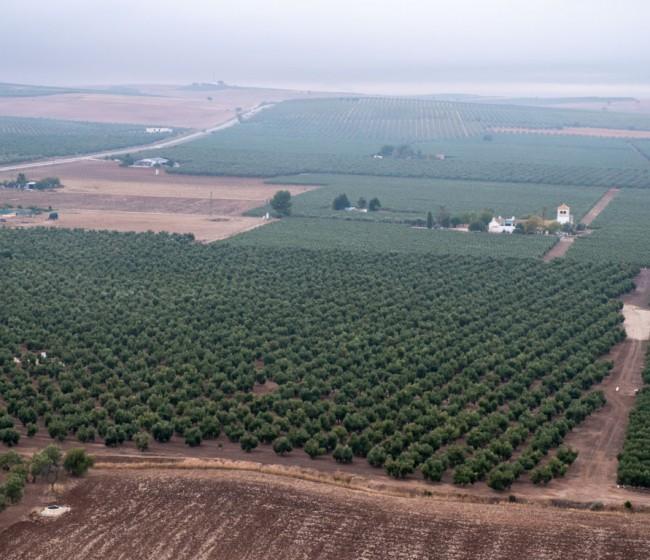 Las salidas de aceite de oliva al mercado superan ya el millón de toneladas
