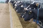 La subida de los precios de las materias primas y piensos para alimentación animal se moderó en abril