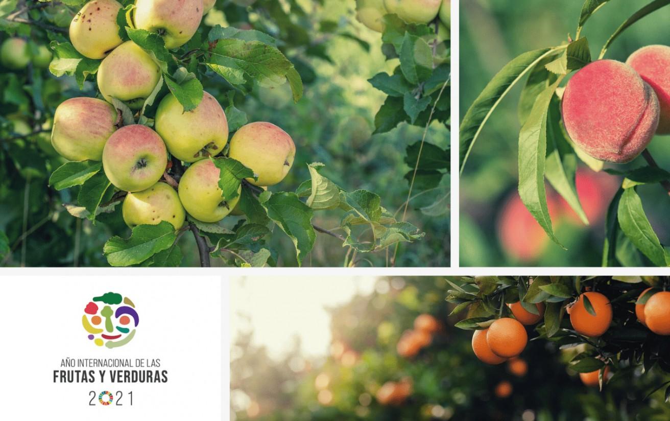 año frutas
