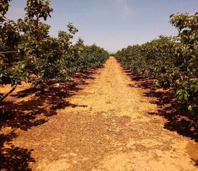 Cambio climático e industrialización incrementaron el estrés hídrico en la agricultura española en el último siglo