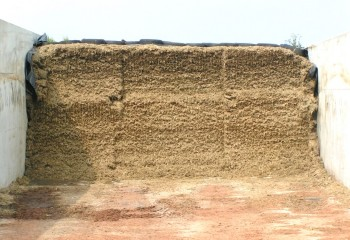 Conservación del maíz forrajero: el papel de los aditivos en el ensilado