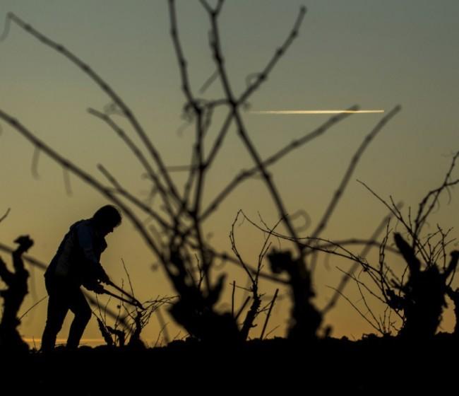 El MAPA reconoce el viñedo singular de 17 nuevos parajes vitícolas de la DOCa Rioja