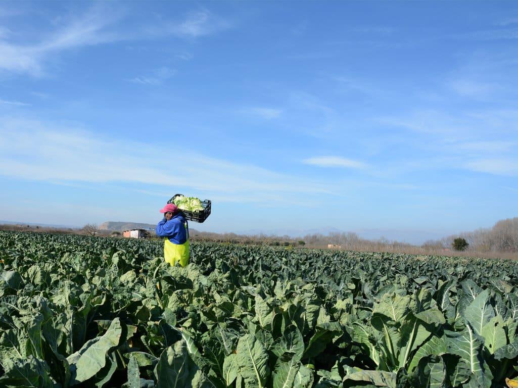 El paro registrado en Agricultura bajó un 4,78 % en mayo pero sube aún casi un 11% en el último año