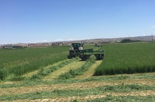 Más de 55 países compraron alfalfa deshidratada española en la campaña 2020/21