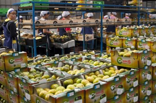 El Gobierno aprueba el real decreto por el que se regula el régimen de certificación fitosanitaria para la exportación hortícola