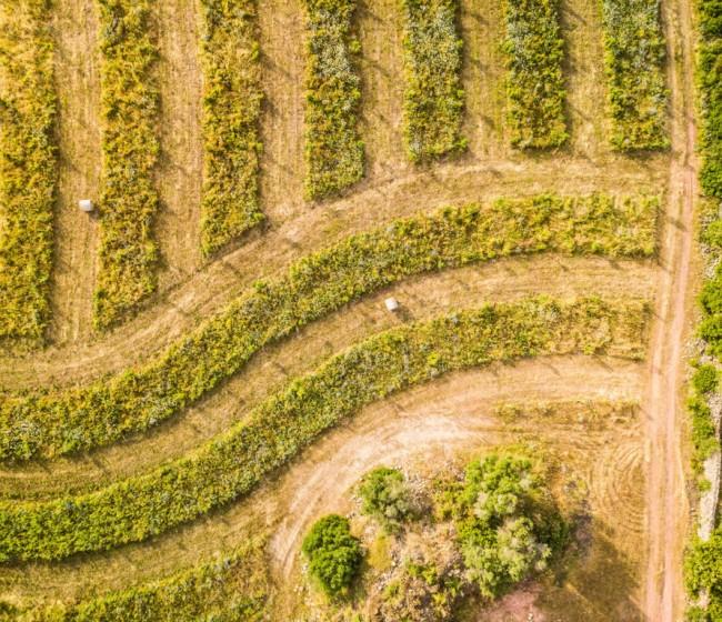 Tribunal de Cuentas Europeo: la actual PAC no ha logrado que la agricultura contamine menos