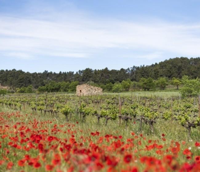 Familia Torres celebra el 17 de junio el I Simposio de Viticultura Regenerativa