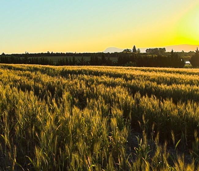 Aragón aprueba el proyecto de ley de la Agricultura Familiar y del Patrimonio Agrario
