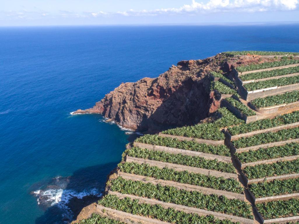 Plantaciones_Plátano_Canarias _baja