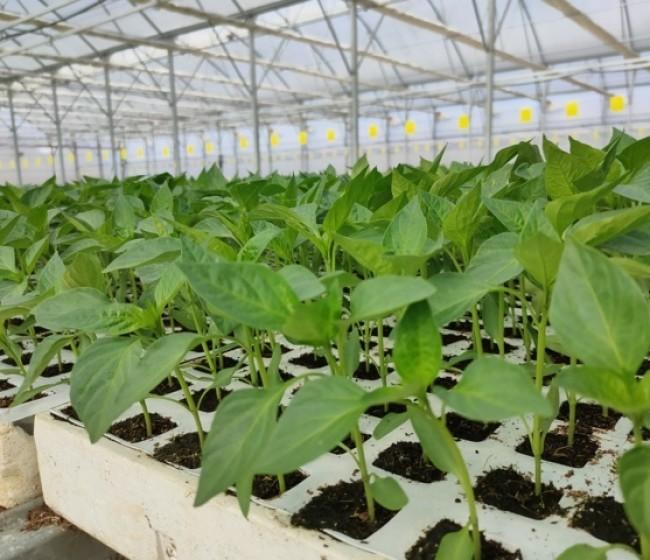 Geslive pone en marcha un sistema de trazabilidad de semillas hortícolas