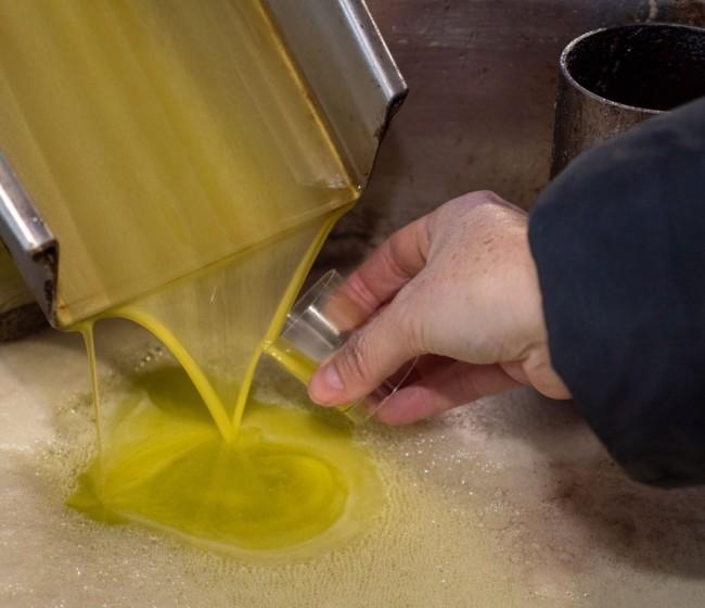 Aprobado el estudio de la cadena de valor del aceite de oliva virgen extra (AOVE)