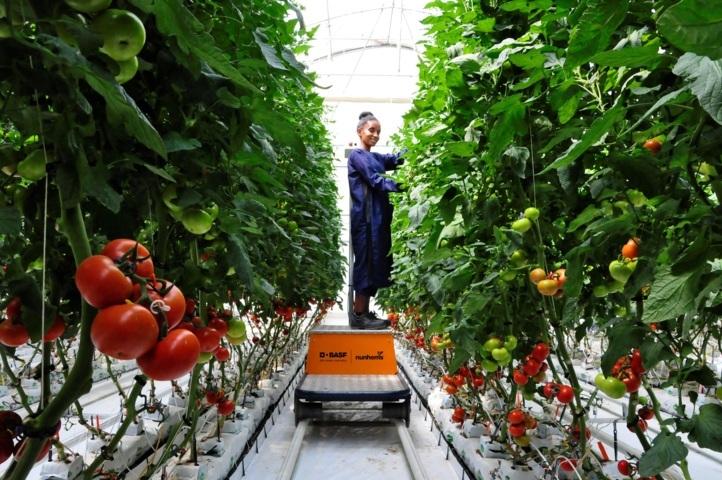 Llegan al mercado las primeras semillas hortícolas producidas por Basf en Etiopía
