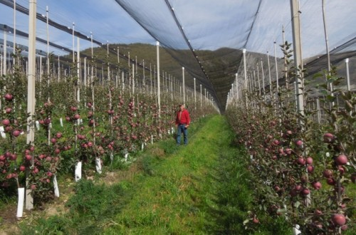 Retos para una fruticultura eficiente y sostenible