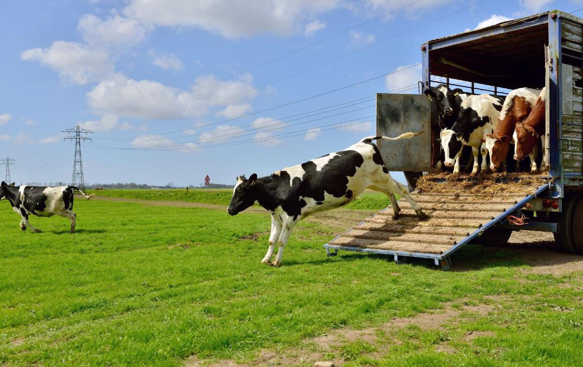 El MAPA ultima un RD para actualizar normas de sanidad y protección de animales vivos durante el transporte