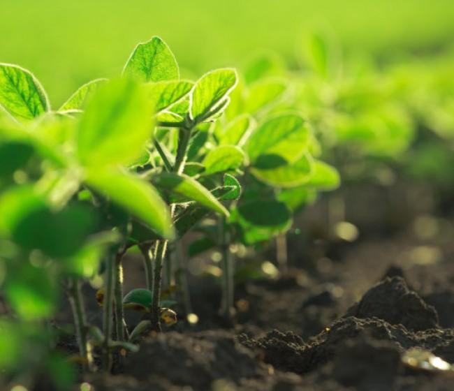 Bioibérica firma un acuerdo con Biome Makers para promover la salud del suelo