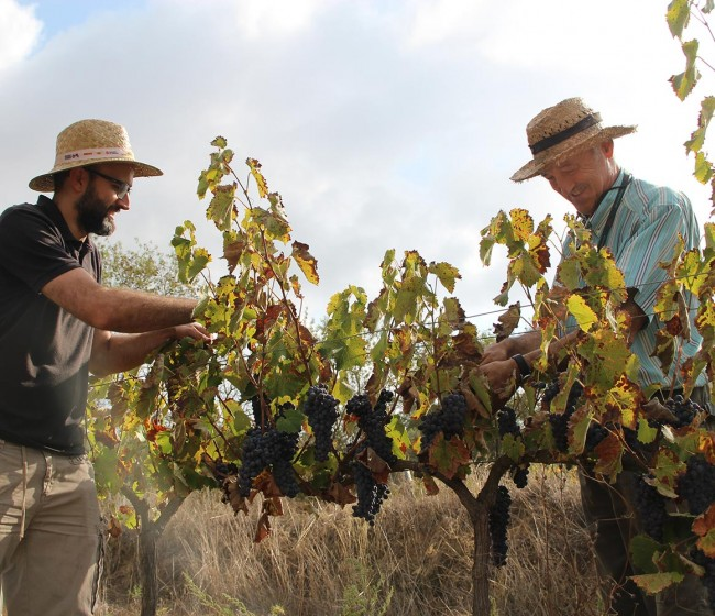 LA FEV incorpora a Spanish Organic Wines, con 34 bodegas de vino ecológico