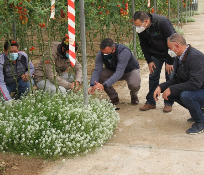 Los agricultores como promotores del control biológico en invernaderos en el proyecto H2020 IPMWorks