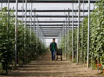 La interprofesional Hortiespaña pide una mayor defensa de los intereses del sector hortofrutícola ante la UE