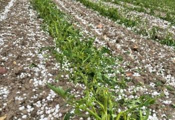 Las indemnizaciones al agro por las tormentas de pedrisco de las dos últimas semanas superan los 30 M€