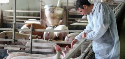 Evolución y perspectivas de nuestra ganadería