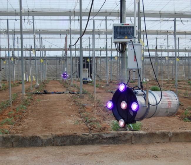 Biocaptur S50, tecnología led para el control de Tuta absoluta