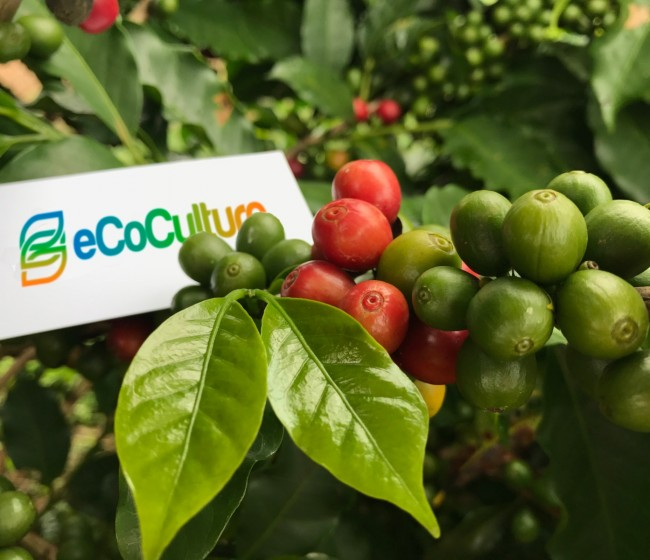 Ecoculture avanza en América Latina y prepara su llegada a Oriente Próximo