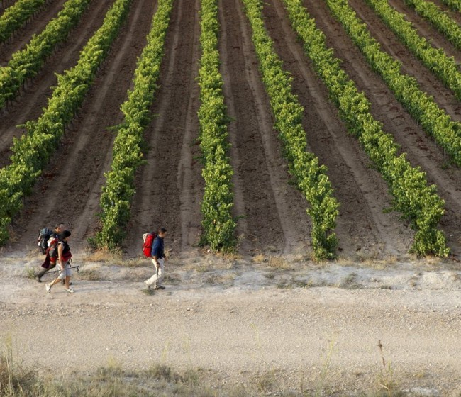 Reparto territorial de 126,1 M€ para reestructuración e inversiones del PASVE vitivinícola