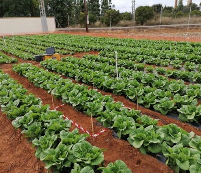 Influencia de distintos sistemas de semiforzado sobre la eficiencia en el uso de agua de riego en cultivos hortícolas al aire libre