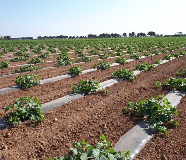 El sector del melón y la sandía de CL-M confía en la exportación para elevar precios