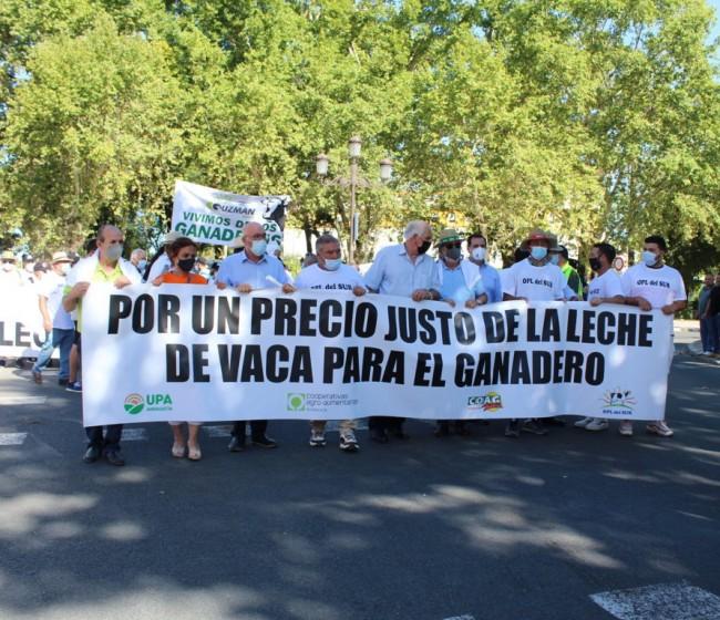 Un millar de ganaderos lácteos andaluces protestan por la complicada situación del sector