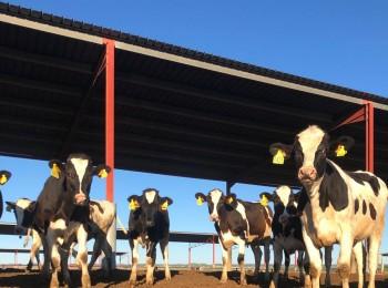 Las enfermedades emergentes y reemergentes y su impacto en la ganadería