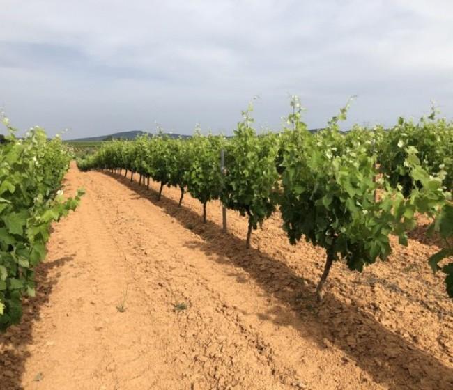 Karbicure y Award, dos nuevas soluciones de Certis para el cultivo de la viña