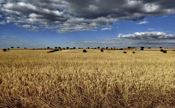 La explotación media en España cuenta con 47 hectáreas, un 41% arrendadas