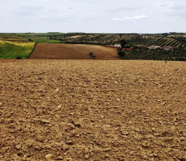 El BOE publica la Ley 2/2021 contra la despoblación de Castilla-La Mancha