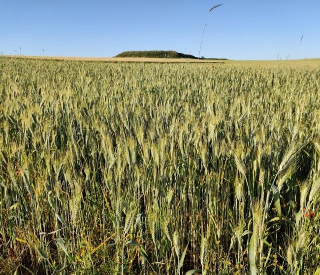 Abonados ya 35 M€ en indemnizaciones por daños en cultivos herbáceos