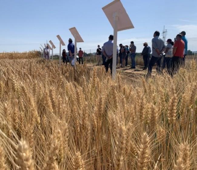 Jornada de formación en prácticas agrícolas sostenibles para un mejor cultivo de cereal