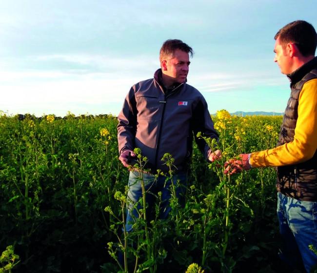 KWS lanza una campaña de apoyo técnico a la colza híbrida, un cultivo con presente y mucho futuro